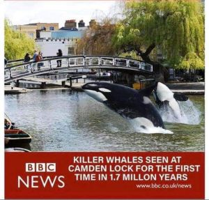 killer whales at Camden Lock