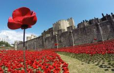Ceramic poppies at the Tower of London, Aug 2014